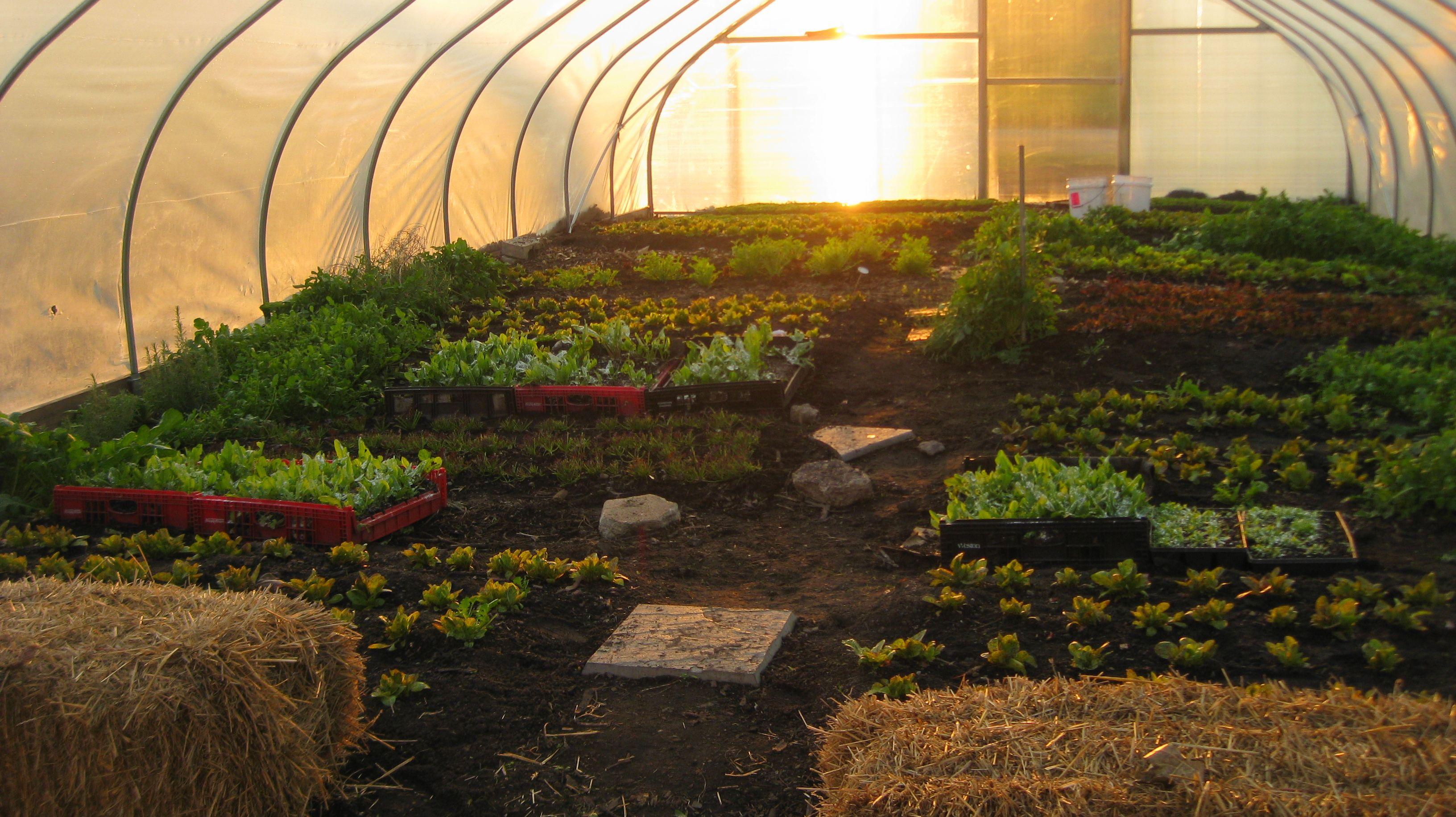 November | 2010 | Brown. Girl. Farming.